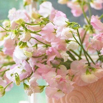 Seasonal Flowers For A Spring Wedding Romantic Or Rustic